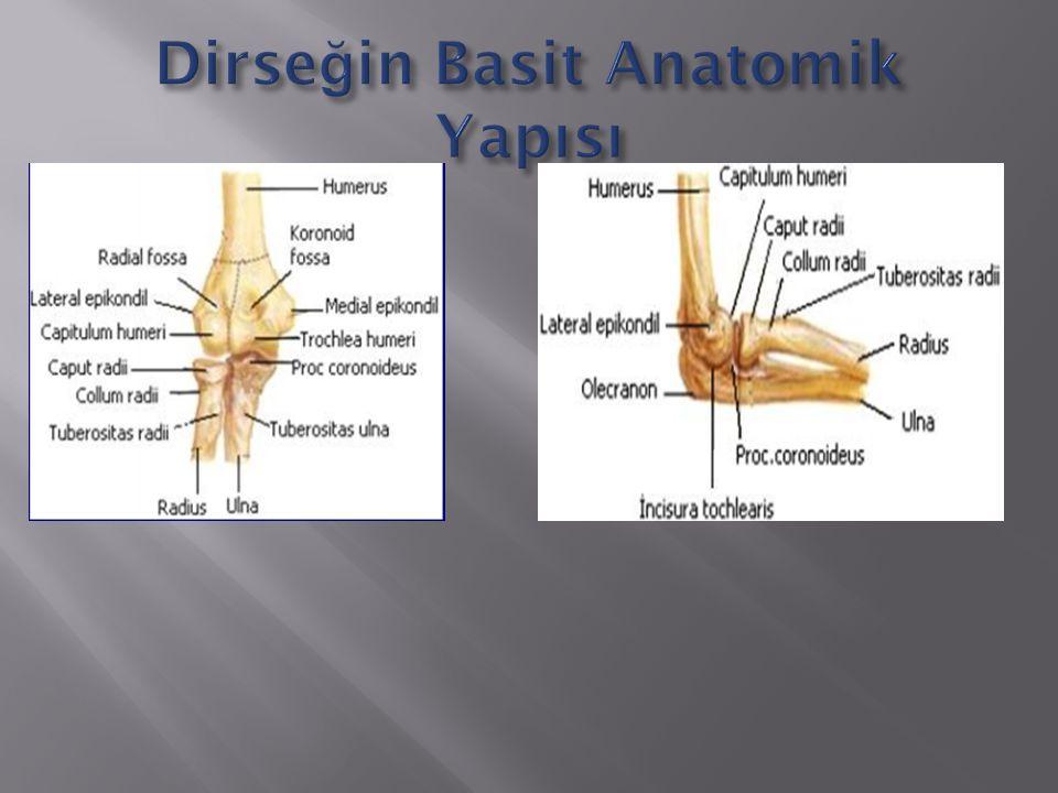 Dirseğin Basit Anatomik Yapısı