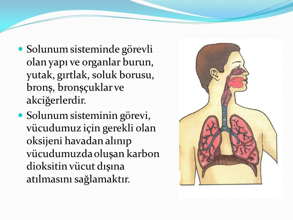 Solunum sisteminde görevli olan yapı ve organlar burun, yutak, gırtlak, soluk borusu, bronş, bronşçuklar ve akciğerlerdir.