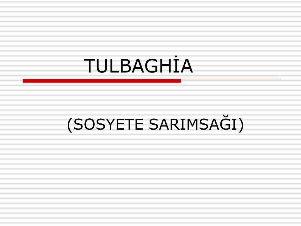 TULBAGHİA (SOSYETE SARIMSAĞI)