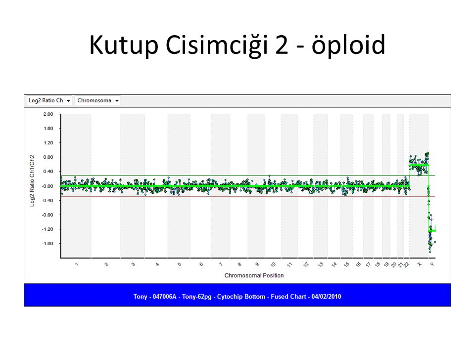 Kutup Cisimciği 2 - öploid