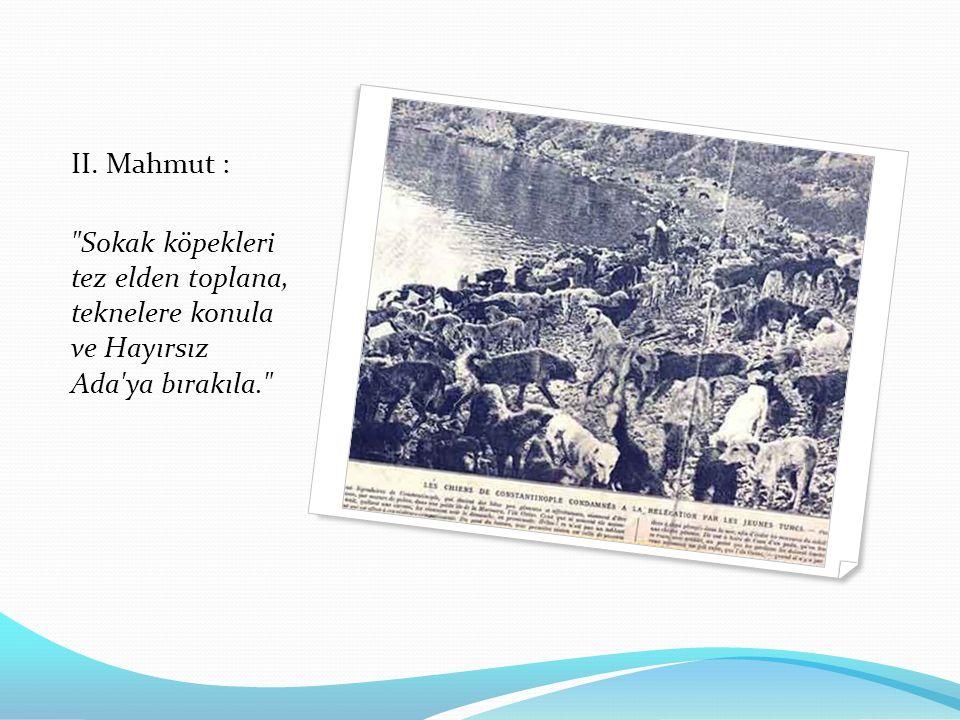II. Mahmut : Sokak köpekleri tez elden toplana, teknelere konula ve Hayırsız Ada ya bırakıla.