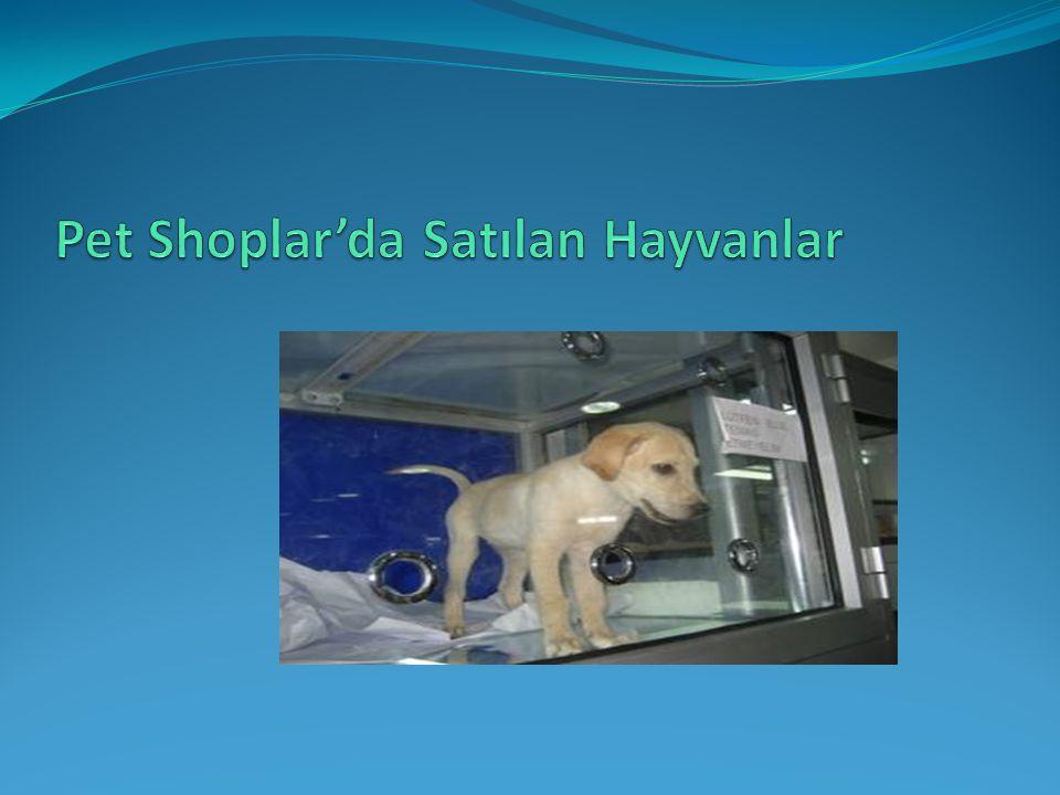 Pet Shoplar'da Satılan Hayvanlar