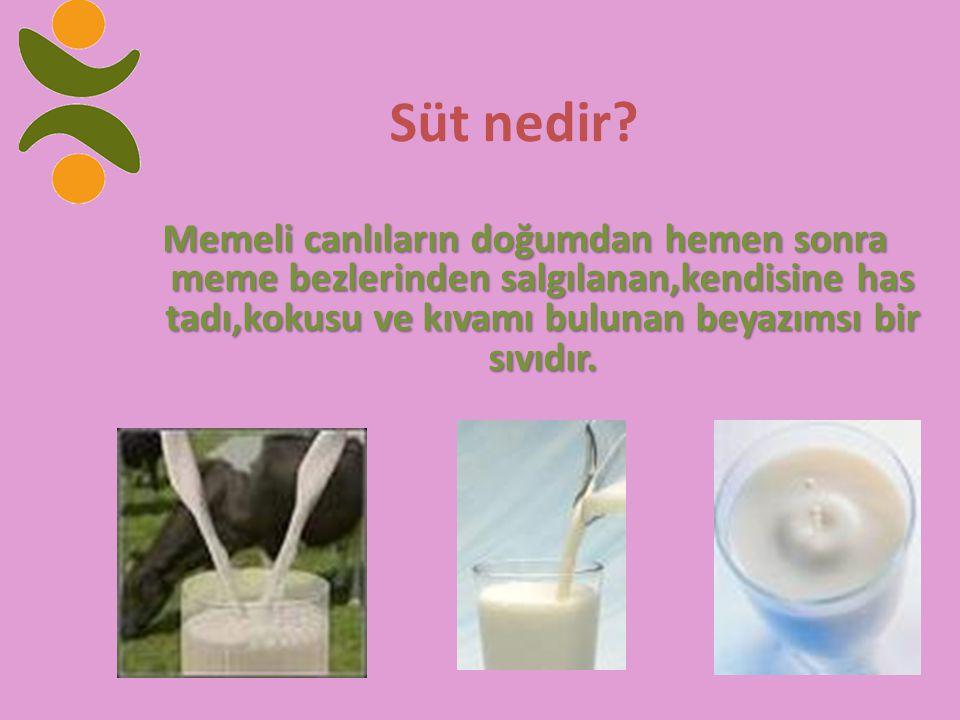 Süt nedir.