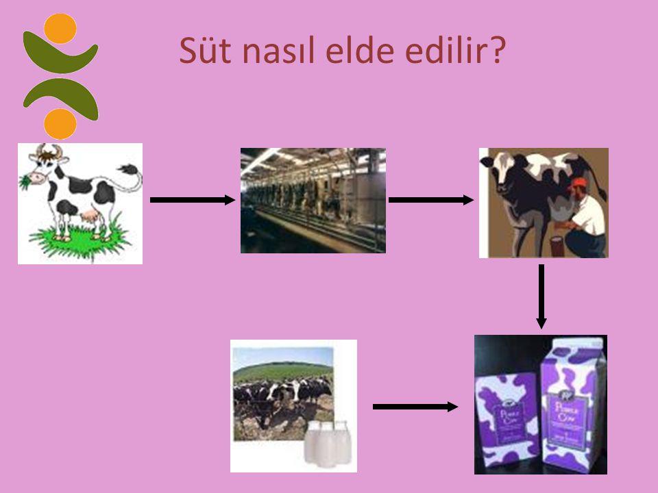 Süt nasıl elde edilir