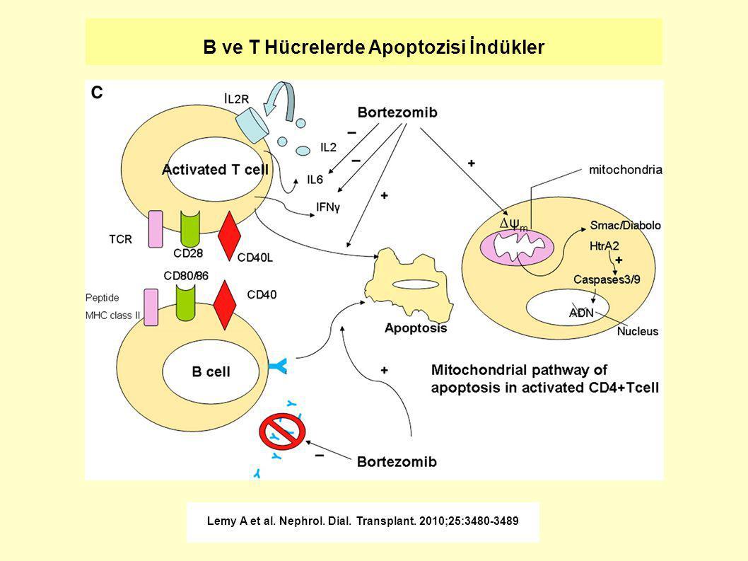 B ve T Hücrelerde Apoptozisi İndükler