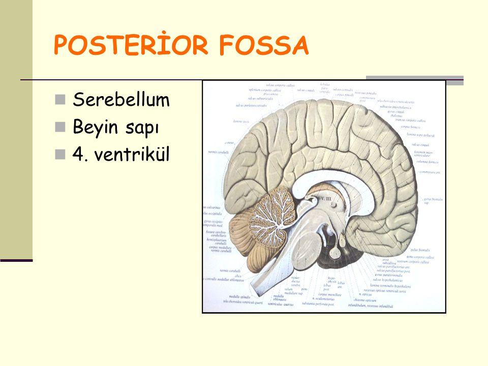 POSTERİOR FOSSA Serebellum Beyin sapı 4. ventrikül