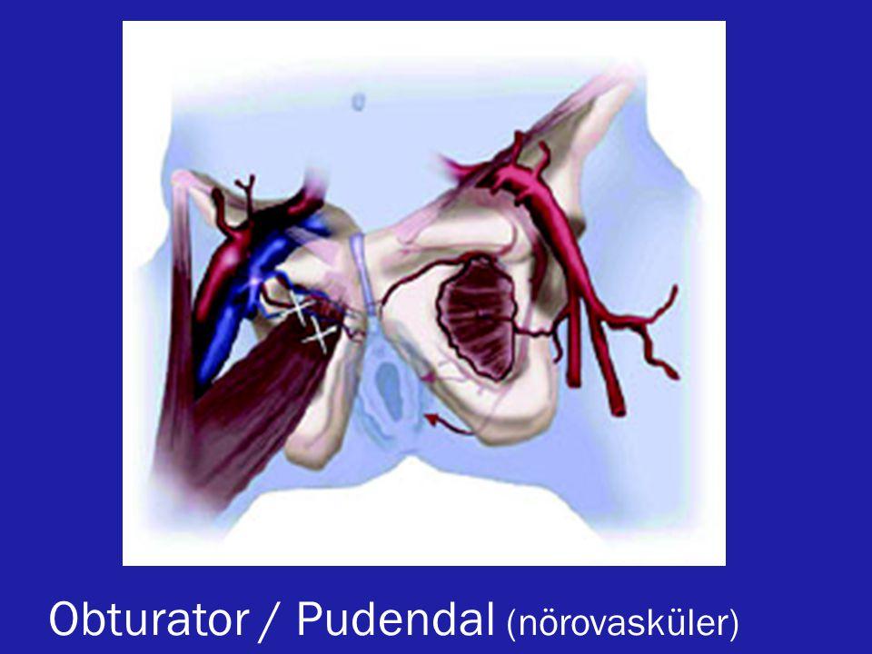 Obturator / Pudendal (nörovasküler)