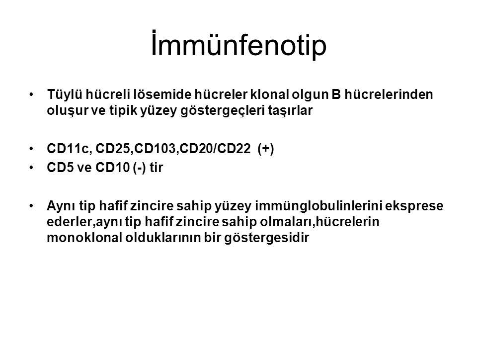 İmmünfenotip Tüylü hücreli lösemide hücreler klonal olgun B hücrelerinden oluşur ve tipik yüzey göstergeçleri taşırlar.