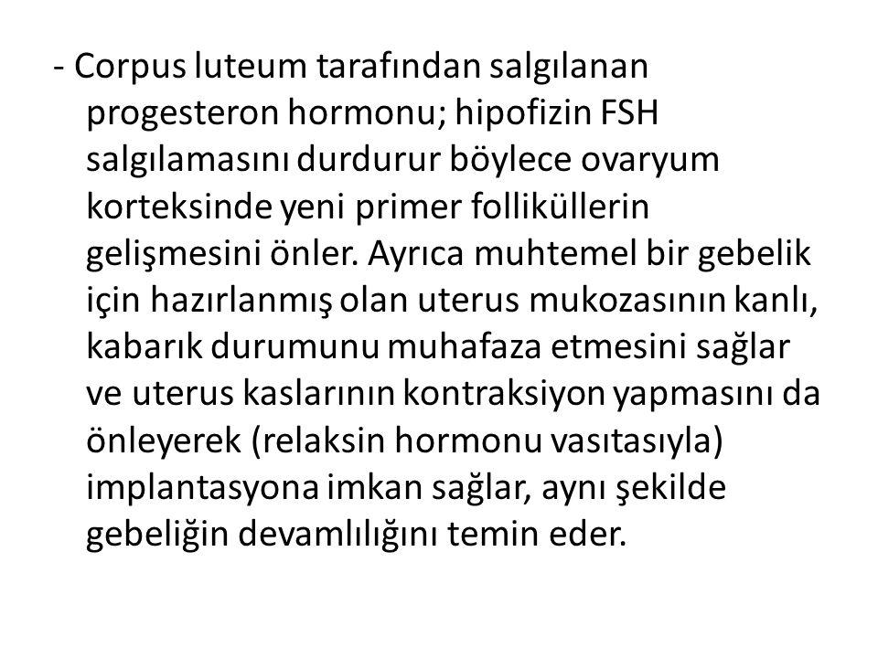 - Corpus luteum tarafından salgılanan progesteron hormonu; hipofizin FSH salgılamasını durdurur böylece ovaryum korteksinde yeni primer folliküllerin gelişmesini önler.