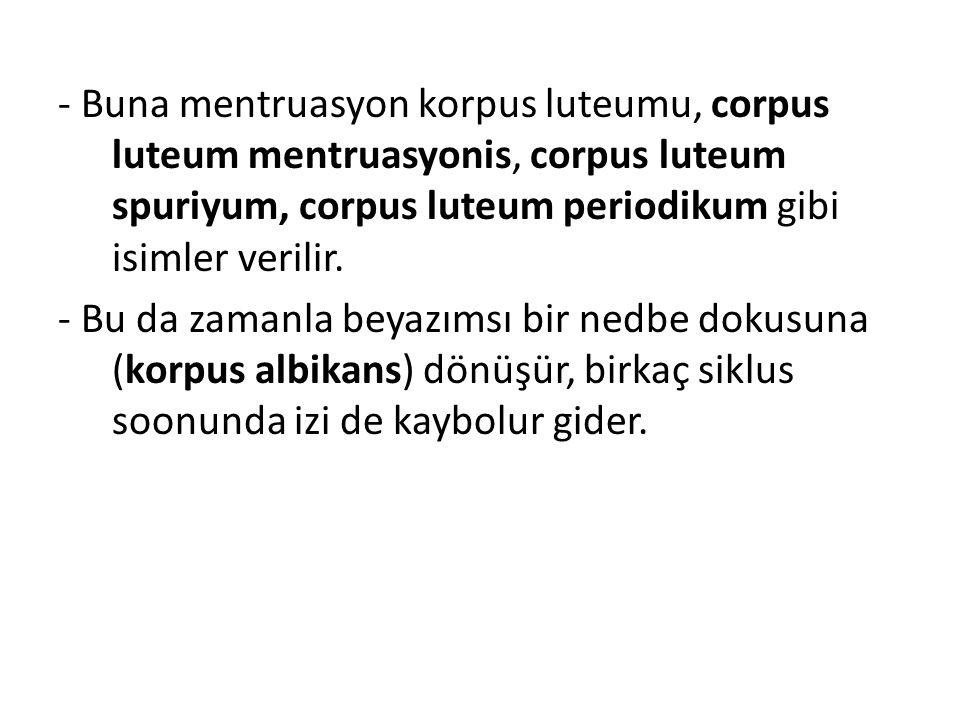 - Buna mentruasyon korpus luteumu, corpus luteum mentruasyonis, corpus luteum spuriyum, corpus luteum periodikum gibi isimler verilir.
