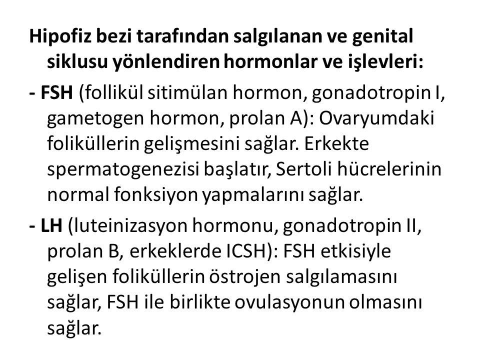 Hipofiz bezi tarafından salgılanan ve genital siklusu yönlendiren hormonlar ve işlevleri: - FSH (follikül sitimülan hormon, gonadotropin I, gametogen hormon, prolan A): Ovaryumdaki foliküllerin gelişmesini sağlar.