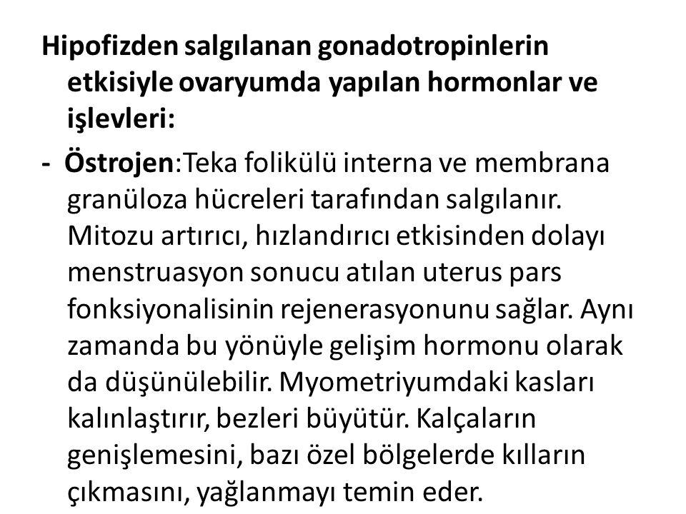 Hipofizden salgılanan gonadotropinlerin etkisiyle ovaryumda yapılan hormonlar ve işlevleri: - Östrojen:Teka folikülü interna ve membrana granüloza hücreleri tarafından salgılanır.