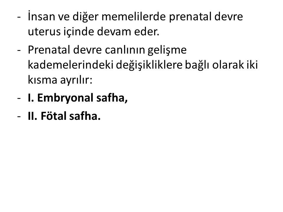 İnsan ve diğer memelilerde prenatal devre uterus içinde devam eder.
