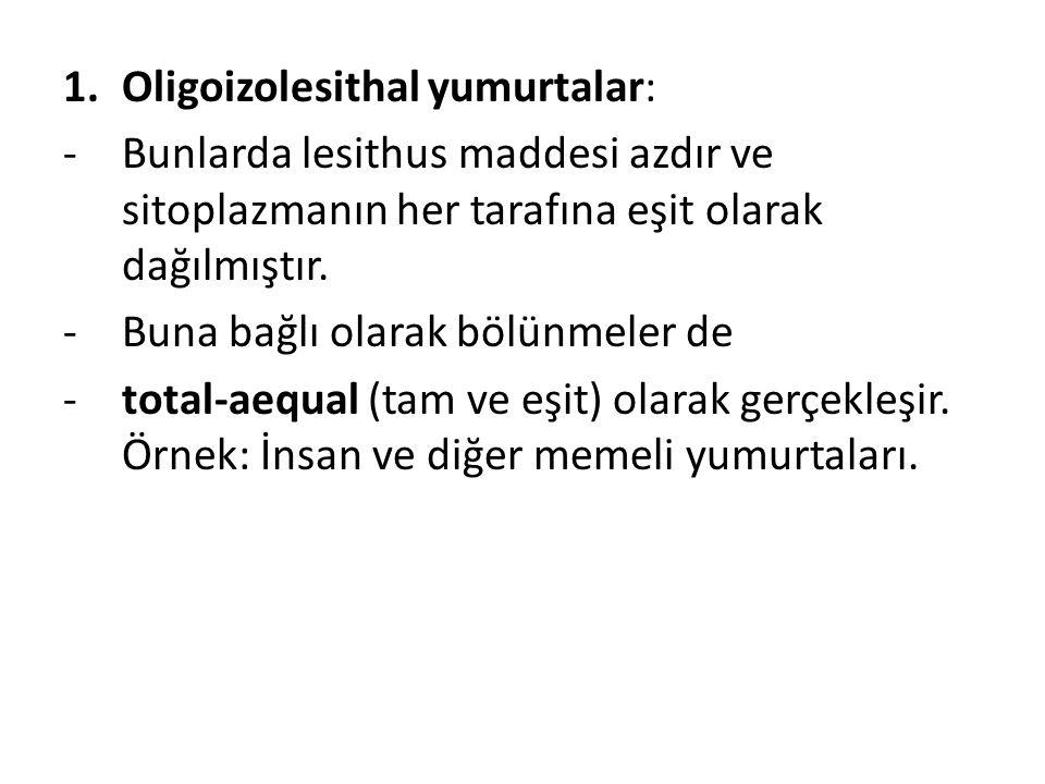 Oligoizolesithal yumurtalar: