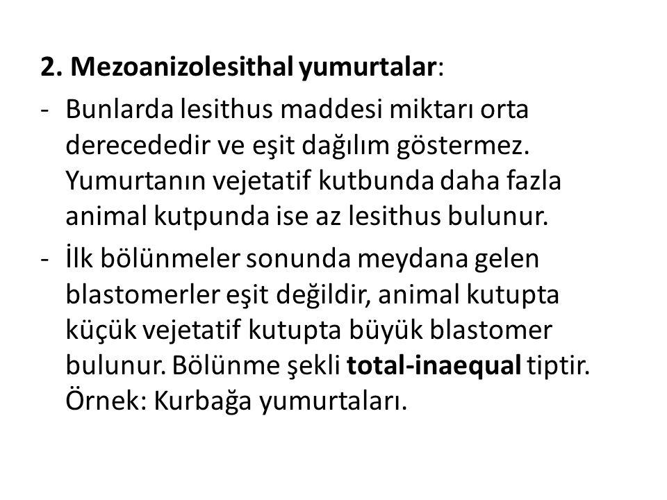 2. Mezoanizolesithal yumurtalar: