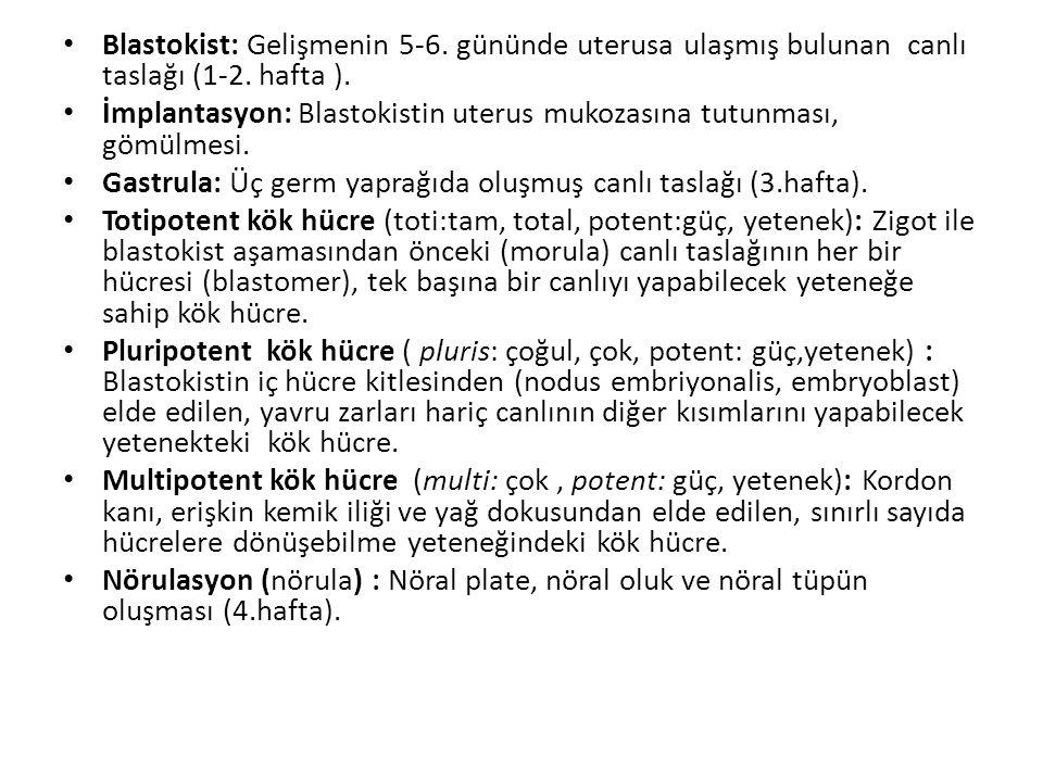 Blastokist: Gelişmenin 5-6