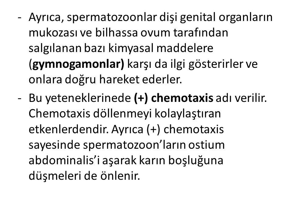 Ayrıca, spermatozoonlar dişi genital organların mukozası ve bilhassa ovum tarafından salgılanan bazı kimyasal maddelere (gymnogamonlar) karşı da ilgi gösterirler ve onlara doğru hareket ederler.
