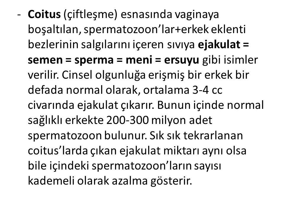 Coitus (çiftleşme) esnasında vaginaya boşaltılan, spermatozoon'lar+erkek eklenti bezlerinin salgılarını içeren sıvıya ejakulat = semen = sperma = meni = ersuyu gibi isimler verilir.