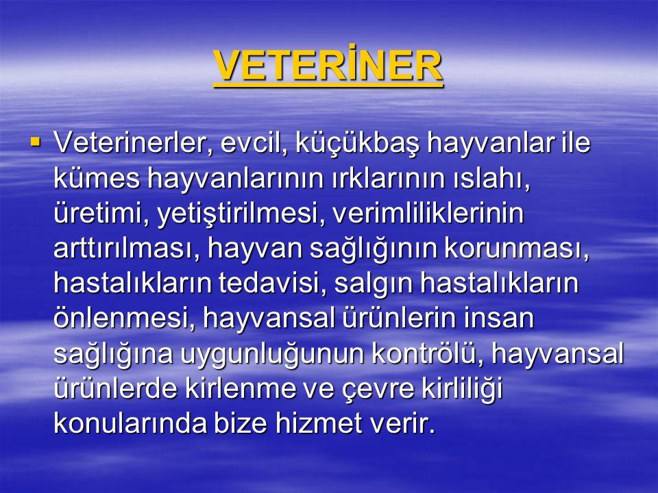 VETERİNER