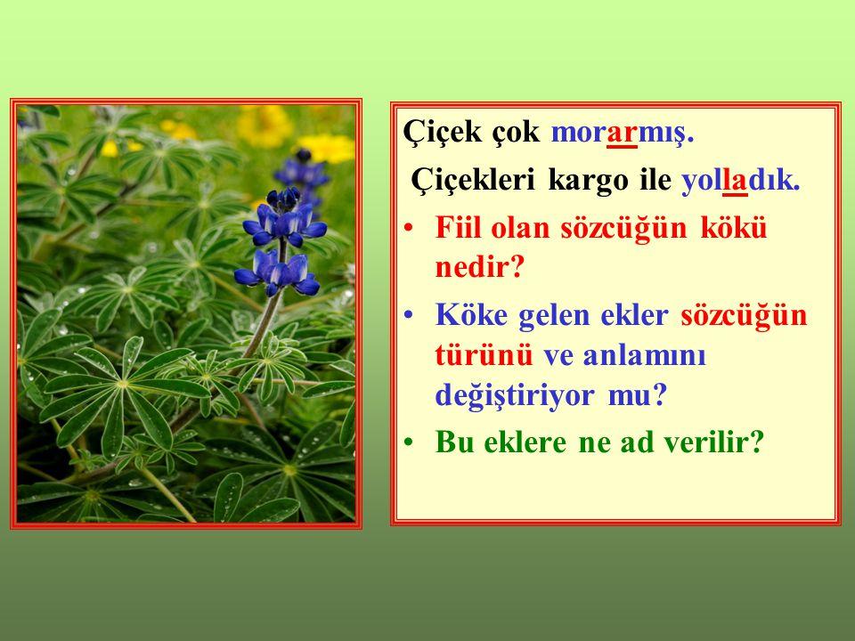 Çiçek çok morarmış. Çiçekleri kargo ile yolladık. Fiil olan sözcüğün kökü nedir Köke gelen ekler sözcüğün türünü ve anlamını değiştiriyor mu
