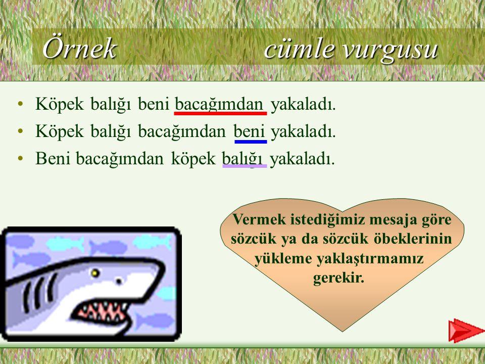 Örnek cümle vurgusu Köpek balığı beni bacağımdan yakaladı.