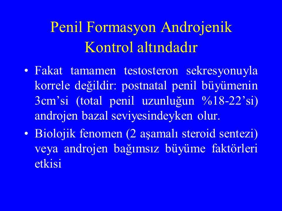 Penil Formasyon Androjenik Kontrol altındadır
