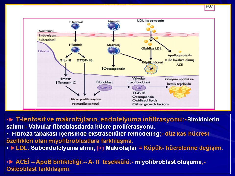 ► T-lenfosit ve makrofajların, endotelyuma infiltrasyonu:- Sitokinlerin salımı:- Valvular fibroblastlarda hücre proliferasyonu.