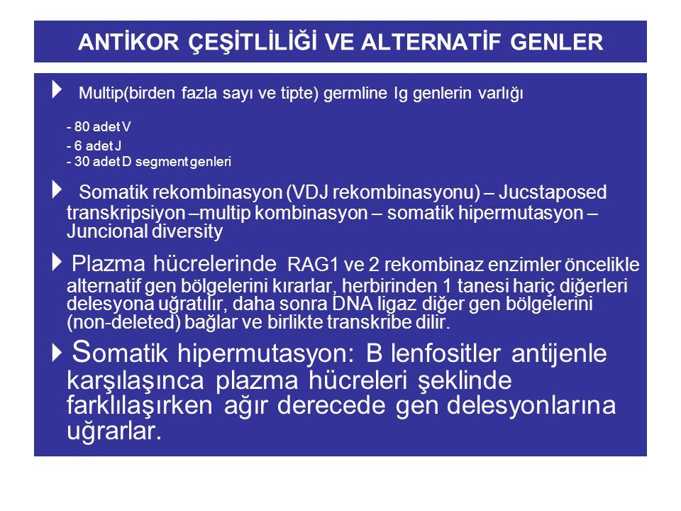 ANTİKOR ÇEŞİTLİLİĞİ VE ALTERNATİF GENLER