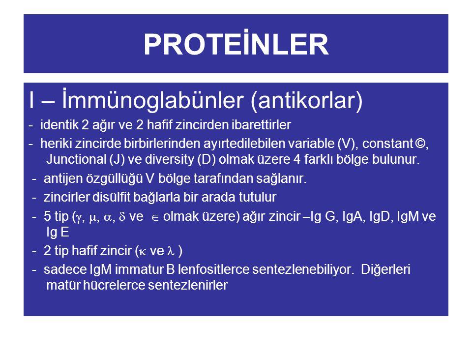 PROTEİNLER I – İmmünoglabünler (antikorlar)