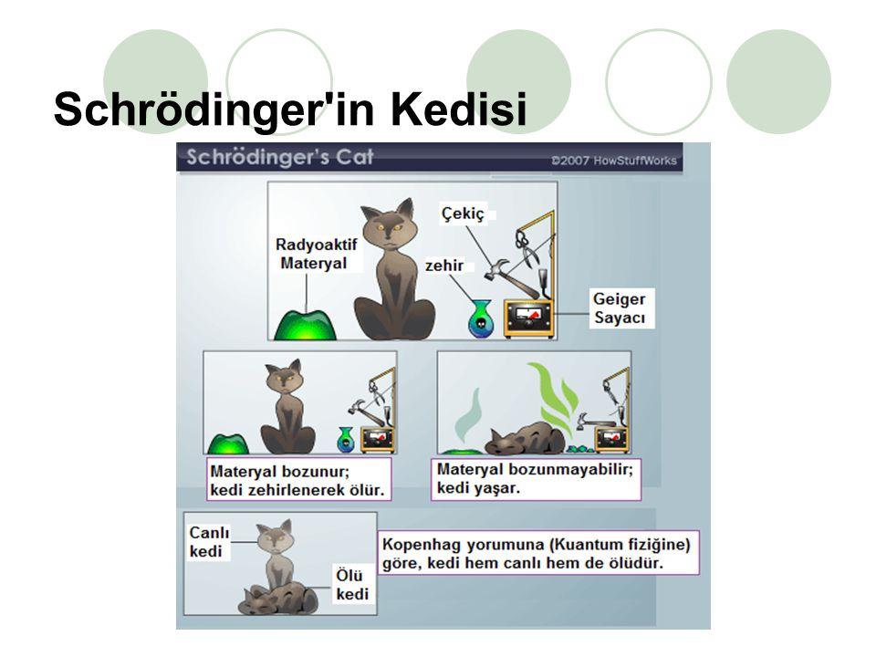 Schrödinger in Kedisi