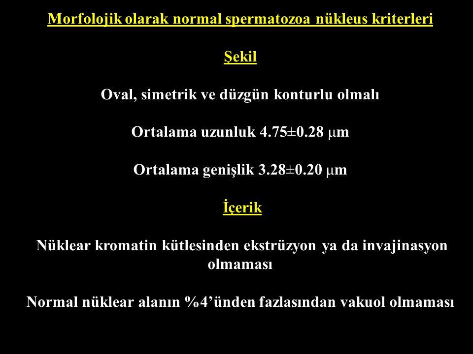 Morfolojik olarak normal spermatozoa nükleus kriterleri Şekil