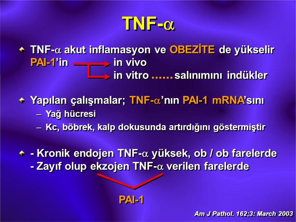 TNF-a TNF-a akut inflamasyon ve OBEZİTE de yükselir PAI-1'in in vivo in vitro salınımını indükler.
