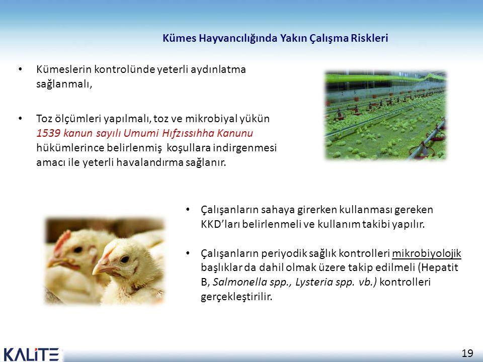 Kümes Hayvancılığında Yakın Çalışma Riskleri
