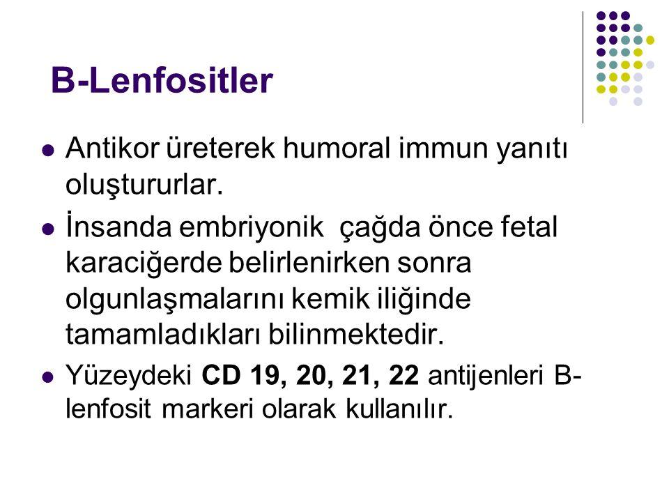 B-Lenfositler Antikor üreterek humoral immun yanıtı oluştururlar.