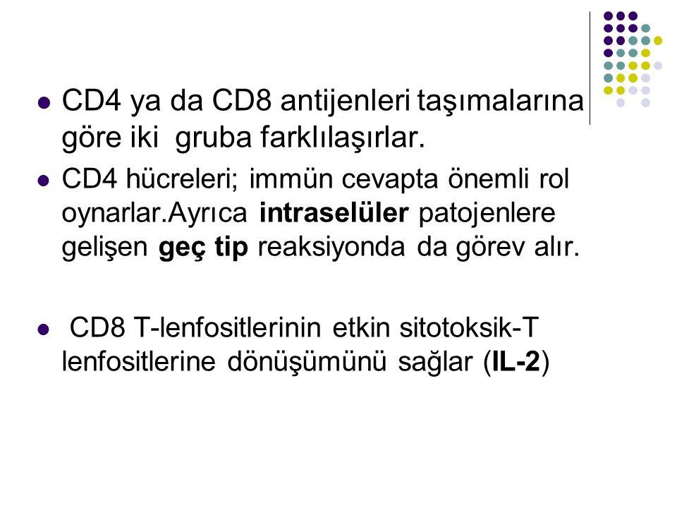CD4 ya da CD8 antijenleri taşımalarına göre iki gruba farklılaşırlar.