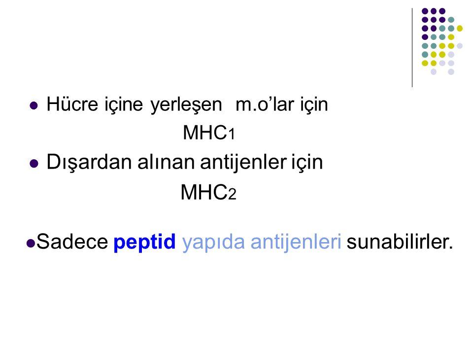 Dışardan alınan antijenler için MHC2