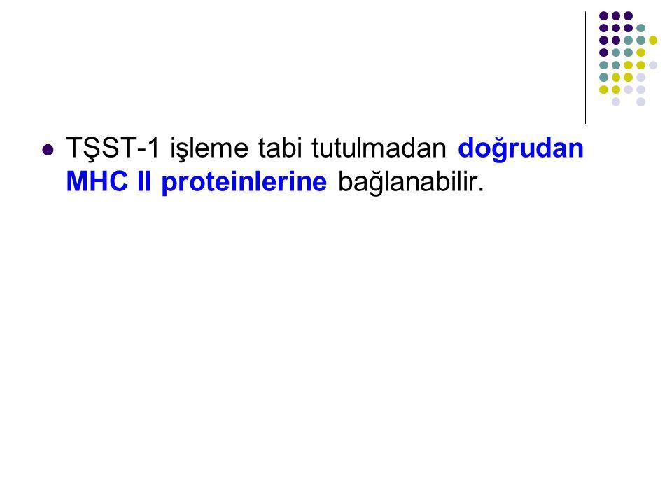 TŞST-1 işleme tabi tutulmadan doğrudan MHC II proteinlerine bağlanabilir.