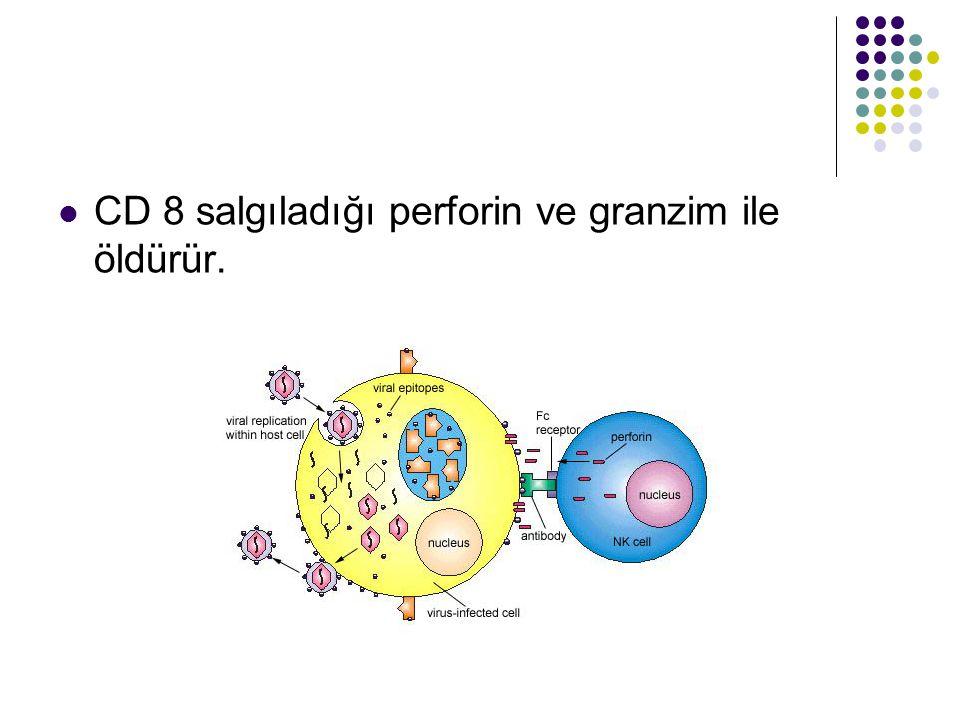 CD 8 salgıladığı perforin ve granzim ile öldürür.
