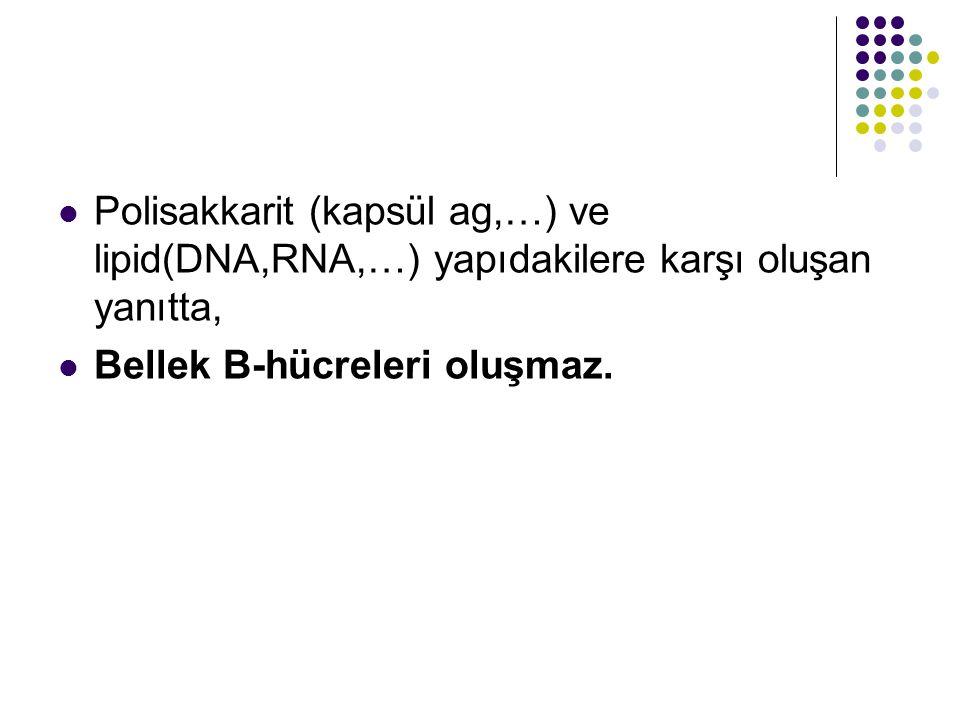 Polisakkarit (kapsül ag,…) ve lipid(DNA,RNA,…) yapıdakilere karşı oluşan yanıtta,