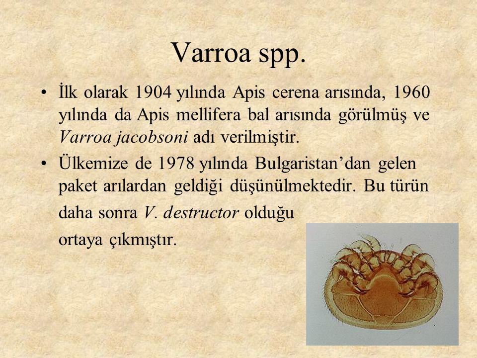 Varroa spp. İlk olarak 1904 yılında Apis cerena arısında, 1960 yılında da Apis mellifera bal arısında görülmüş ve Varroa jacobsoni adı verilmiştir.