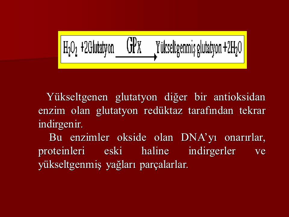 Yükseltgenen glutatyon diğer bir antioksidan enzim olan glutatyon redüktaz tarafından tekrar indirgenir.