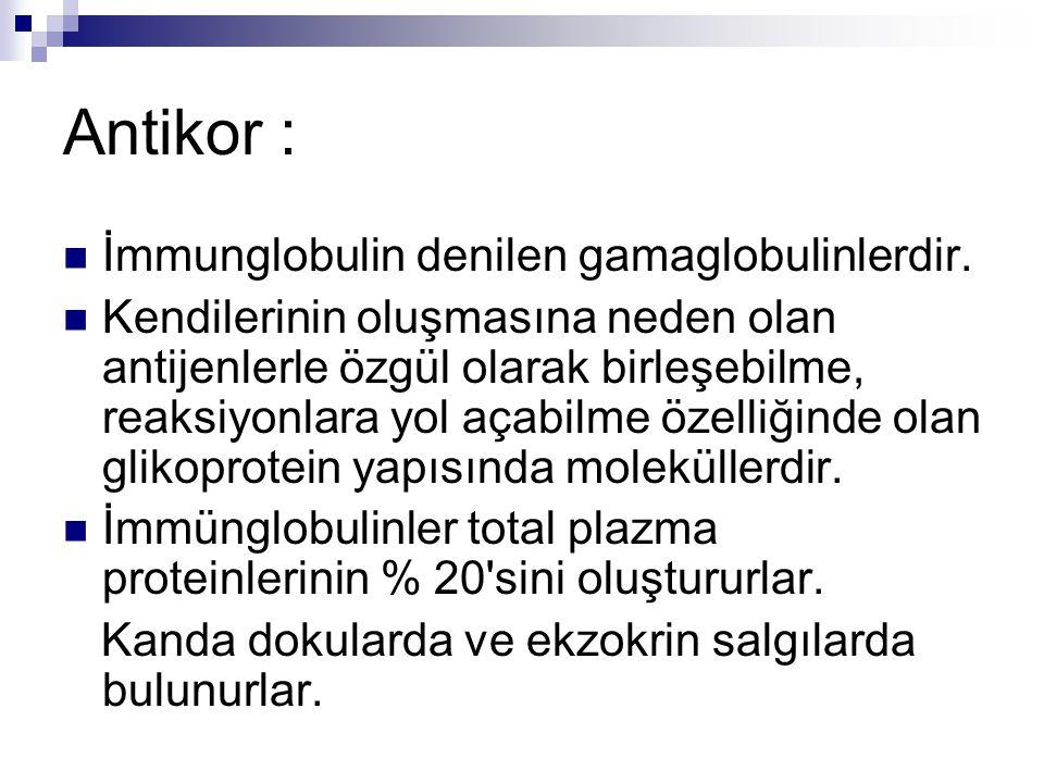 Antikor : İmmunglobulin denilen gamaglobulinlerdir.