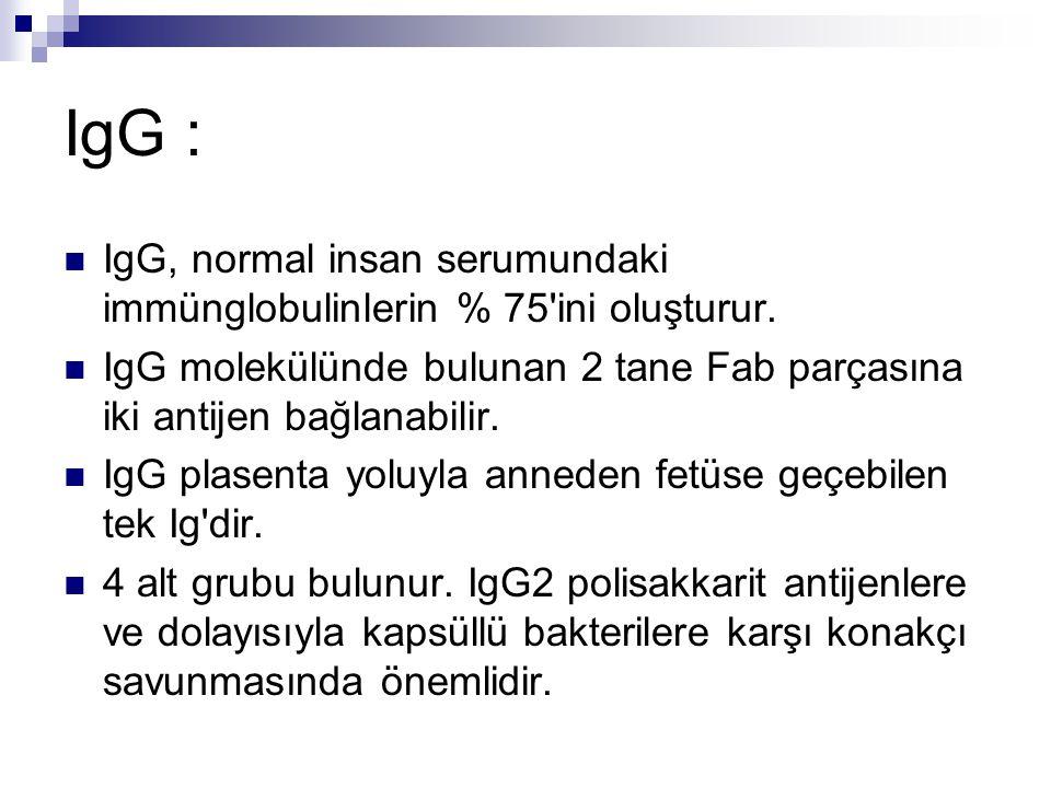 IgG : IgG, normal insan serumundaki immünglobulinlerin % 75 ini oluşturur. IgG molekülünde bulunan 2 tane Fab parçasına iki antijen bağlanabilir.