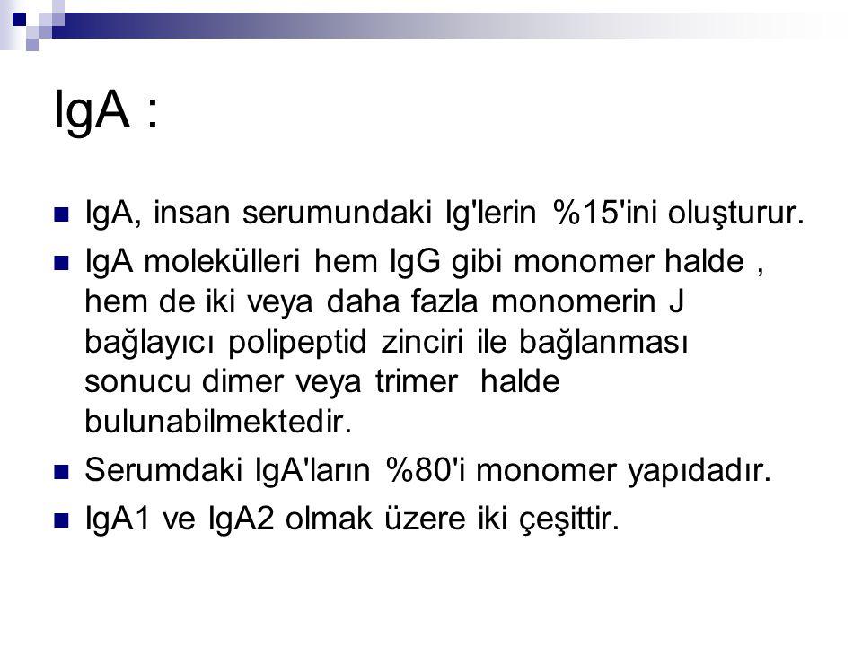 IgA : IgA, insan serumundaki Ig lerin %15 ini oluşturur.