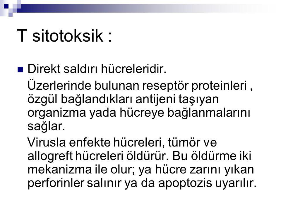 T sitotoksik : Direkt saldırı hücreleridir.