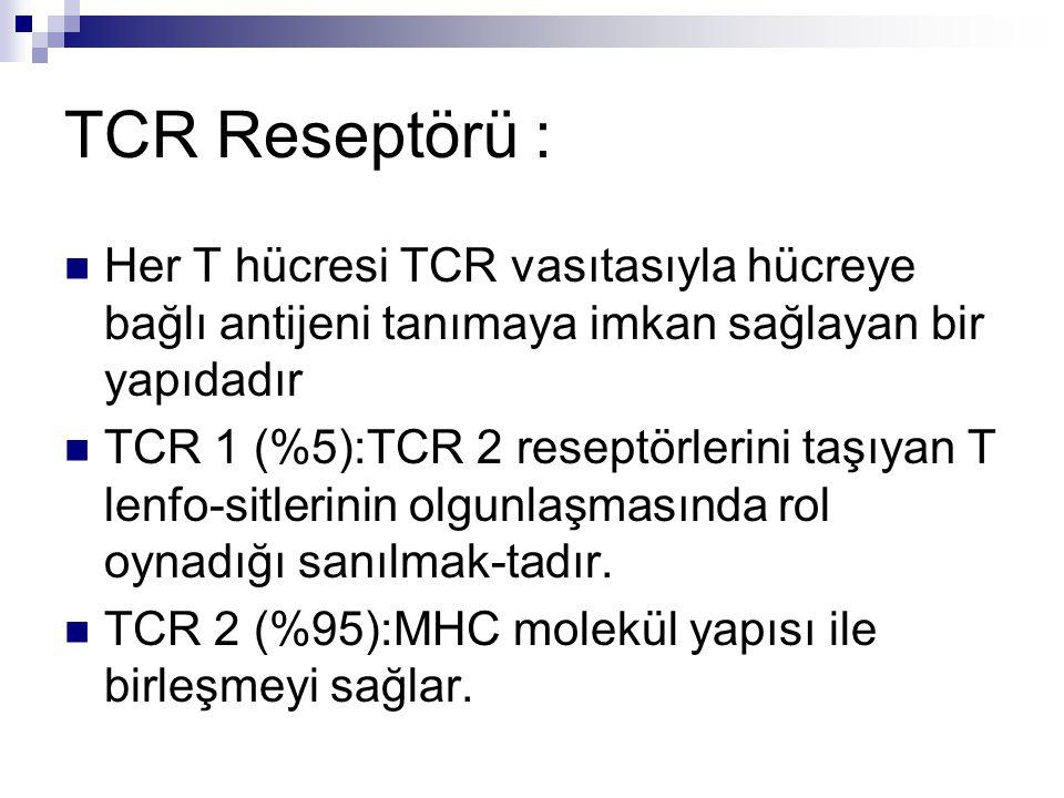 TCR Reseptörü : Her T hücresi TCR vasıtasıyla hücreye bağlı antijeni tanımaya imkan sağlayan bir yapıdadır.
