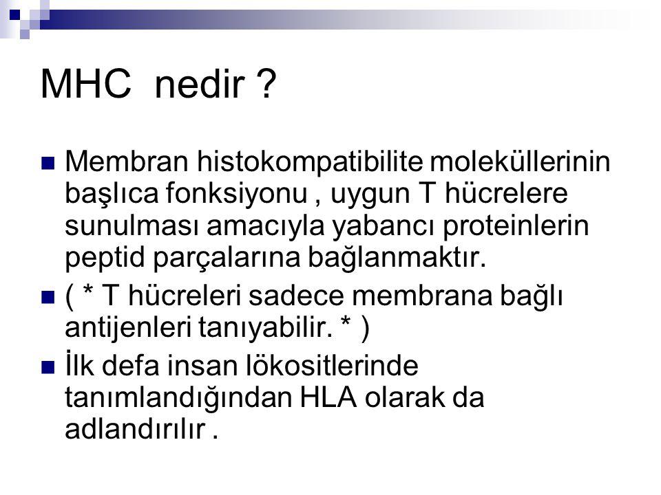 MHC nedir