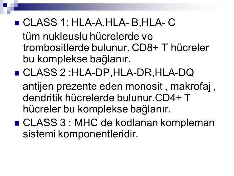 CLASS 1: HLA-A,HLA- B,HLA- C