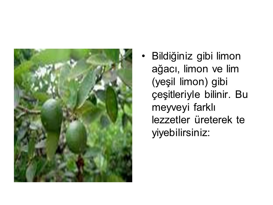 Bildiğiniz gibi limon ağacı, limon ve lim (yeşil limon) gibi çeşitleriyle bilinir.