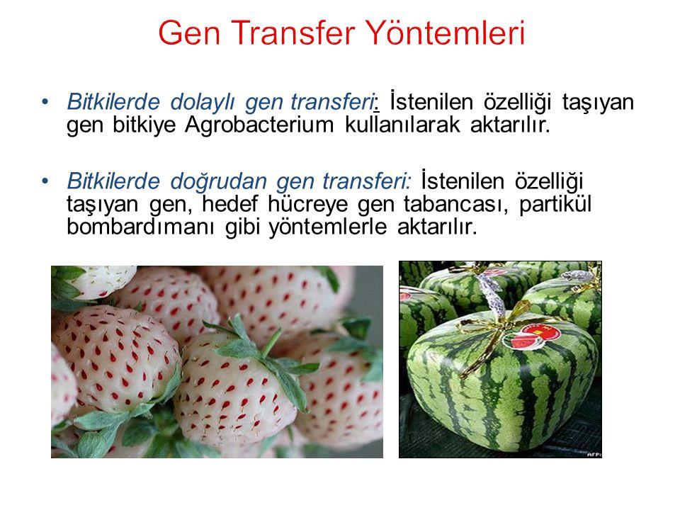 Gen Transfer Yöntemleri